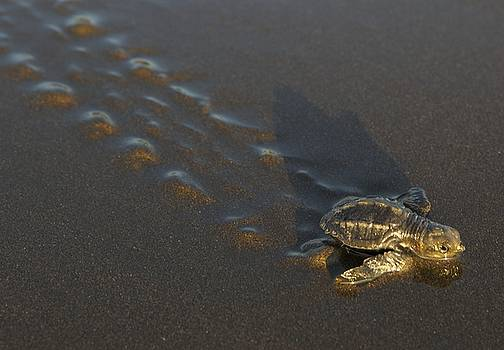 Turtle to the Sea by Nelda Mays