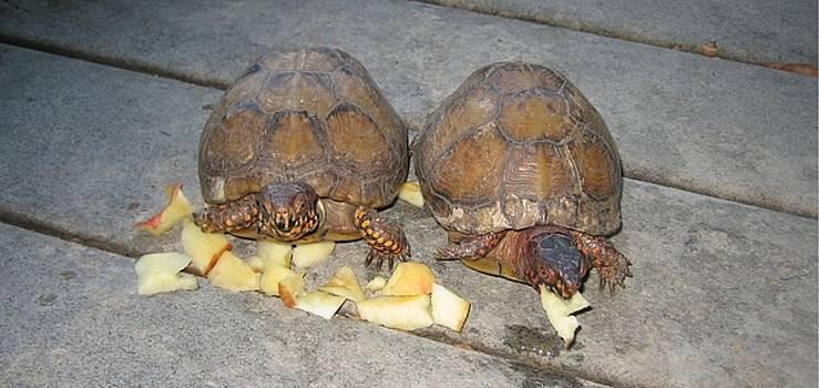 Turtles by Greg Reed Brown