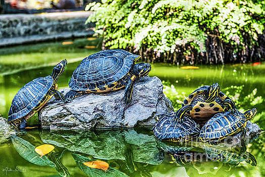 Julian Starks - Turtles having out
