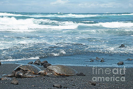 Turtles on black sand beach by Jason Kolenda