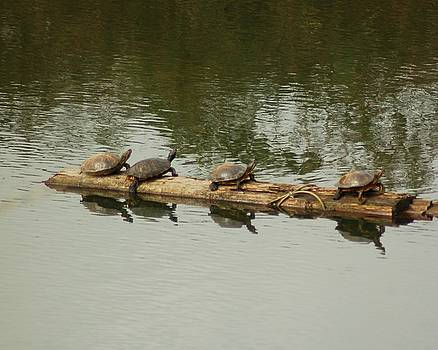 Turtles by Scott Gould