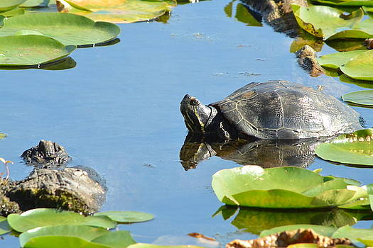 Turtling Turtle by Nicki Bennett