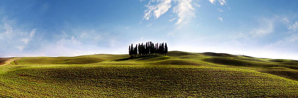 Jed Holtzman - Tuscan Cypress Tree
