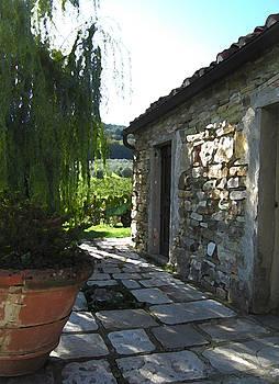 Tuscan Wine Harvest by Paul Barlo