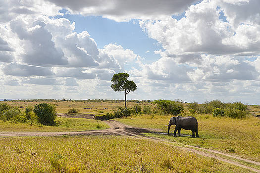 Tusker scape by Balram Panikkaserry
