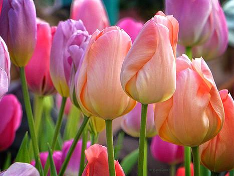 Dee Flouton - Tutti Frutti Tulips