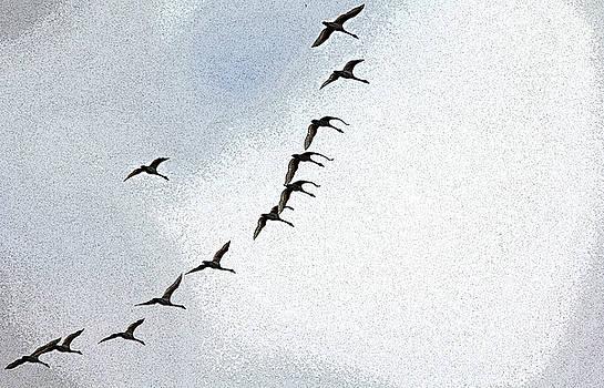 Debbie Oppermann - Twelve Swans A Flying