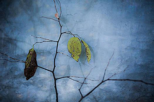 Twigs Under Glass by Mary Nash-Pyott
