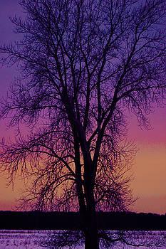 Twilight  by Amy Layton