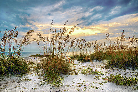 Twilight Sea Oats by Steven Sparks