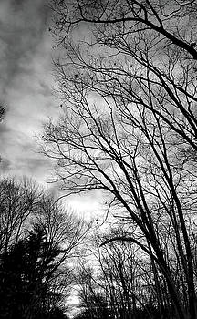Twilight Sky by Lynn Vidler