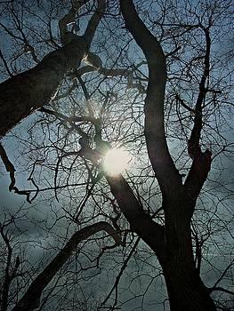 Twilight by Sue Midlock