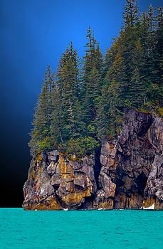 Twilight Trees by Brian Stevens