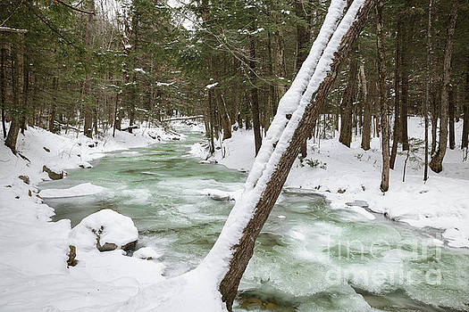 Erin Paul Donovan - Twin Brook - White Mountains New Hampshire