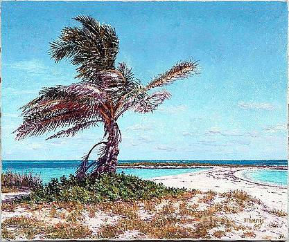 Twin Cove Palm by Eddie Minnis