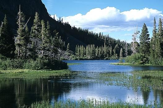 Don Kreuter - Twin Lakes and Ducks Feeding