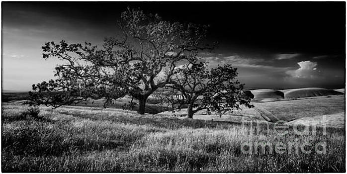 Twin Oaks by James A Crawford