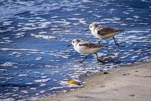 Twin Plovers by Randy Bayne