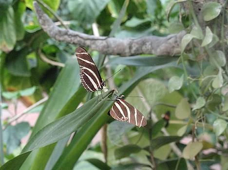 Twin Butterfly Striped Synchronicity by Mozelle Beigel Martin