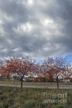 Twin Trees by Minnie Lippiatt