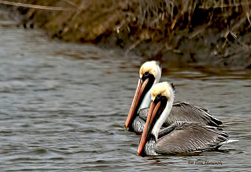 Twins by Bill Perry