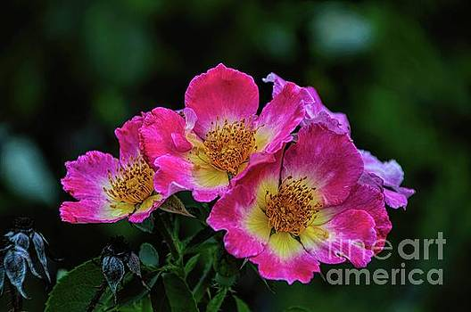 Twins in Pink and White by Diana Mary Sharpton