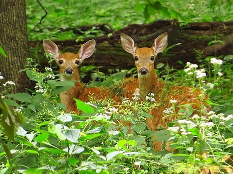 Twins in the Woods by Lori Frisch
