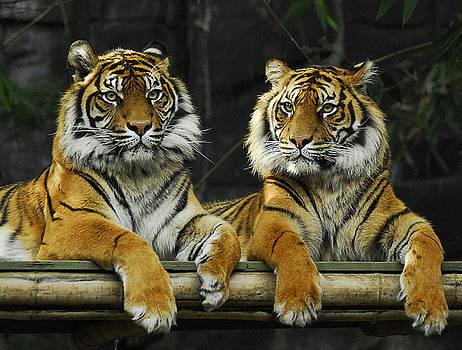 Twins of Taronga by Al Junco