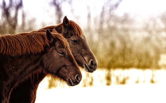 Twins by Ryan Courson