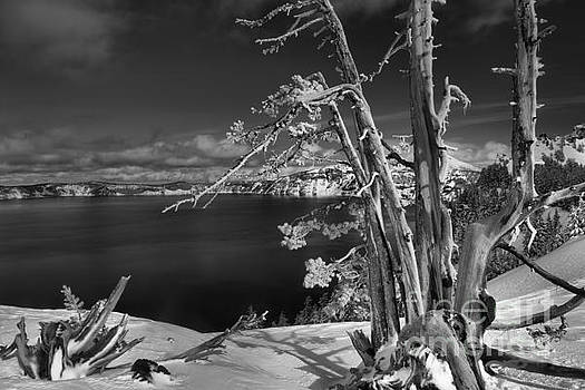 Adam Jewell - Twisted And Tangled At Crater Lake - Black And White