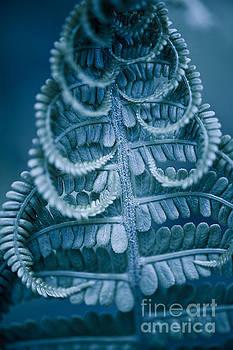 Twisted fern blue leaf macro by Arletta Cwalina