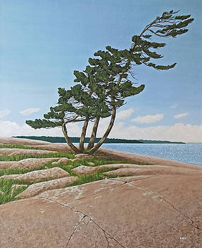 Twisted Rock Pine by Kenneth  Kirsch