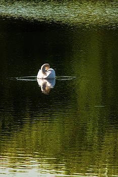 onyonet  photo studios - Twisted Swan