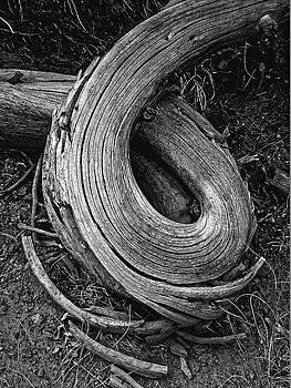 Twisted tree 2, West Virginia 2004 by Chris Honeyman