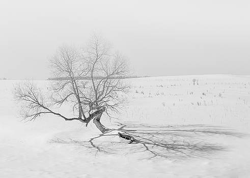 Dan Traun - Twisted Tree