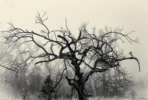 TONY GRIDER - Twisted Tree in Fog