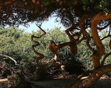Twisty Tree by Chrissy Skeltis