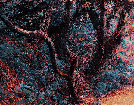 Twisty trees by Frances Lewis