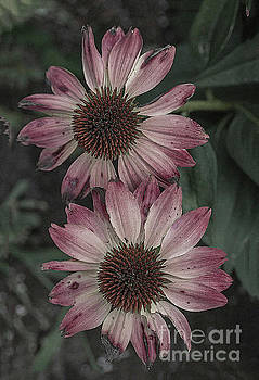Two autumn flowers by Jim Wright