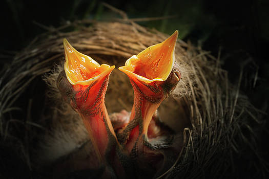 Two baby birds by William Freebilly photography