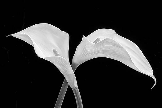 Two Beautiful Calla Lilies Black And White by Garry Gay