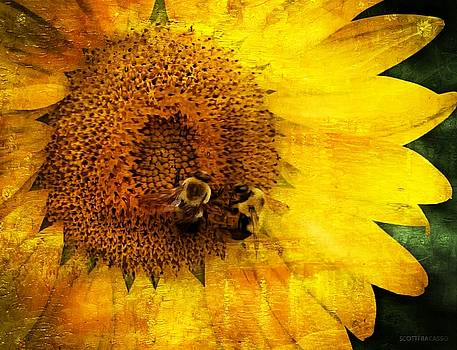 Two Bees, One Sunflower by Scott Fracasso