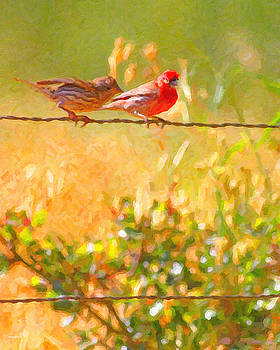 Wingsdomain Art and Photography - Two Birds On A Wire