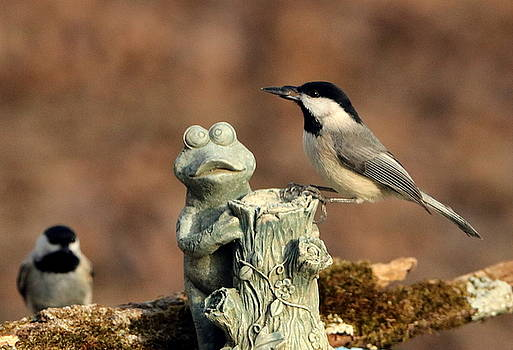 Two Black-Capped Chickadees and Frog by Sheila Brown