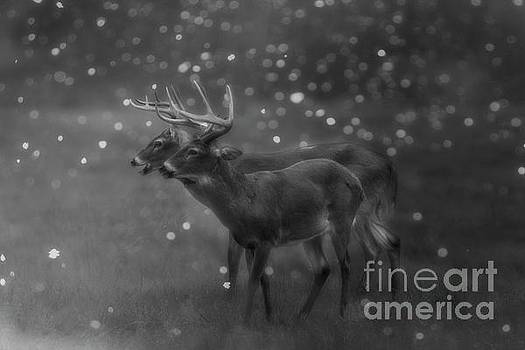 Two Bucks by Geraldine DeBoer
