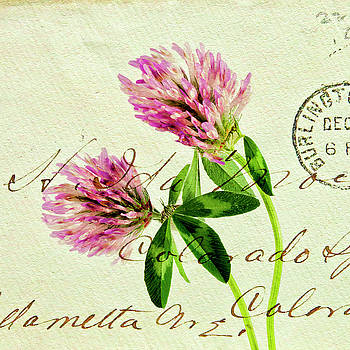 Two Clover Flowers with Postcard Overlay. by Paul Cullen