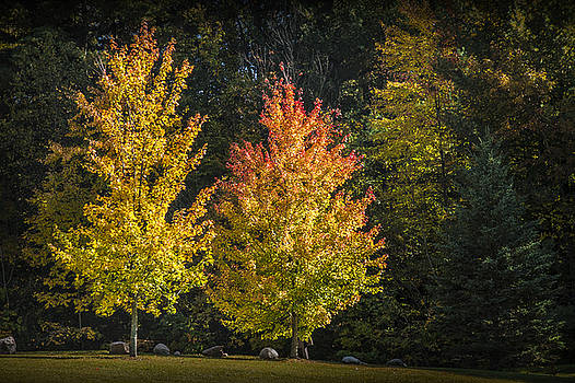 Randall Nyhof - Two Colorful Autumn Trees