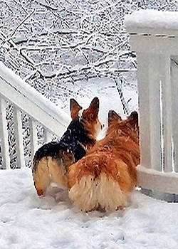 Two Corgis in the Snow by Kathy Kelly