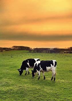 Two Cow Party by Daniel Berman