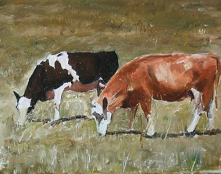 Two Cows by Udi Peled